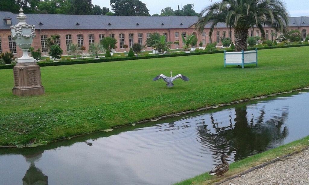 Schwetzingen-2017-Juni-04